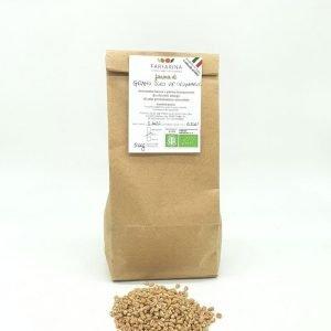 farina grano duro originario